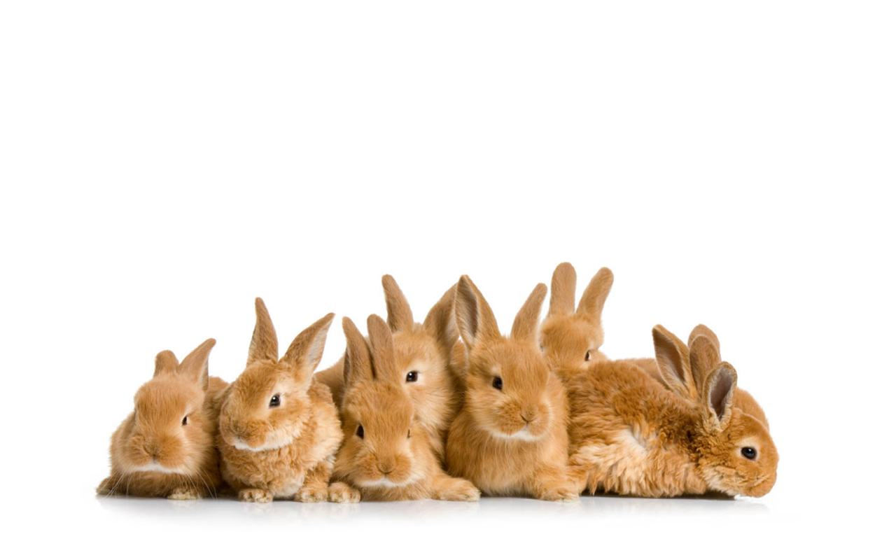 Gallery For 27409642: Bunnies Wallpapers, 1280x800