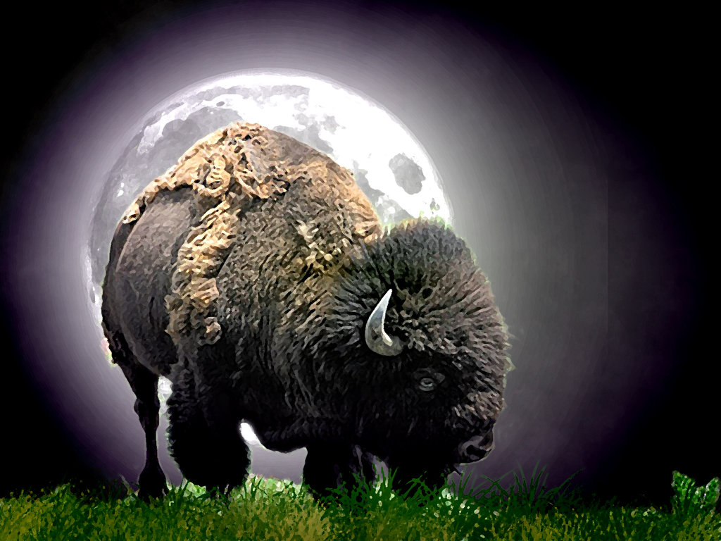Buffalo | HDQ Wallpapers, Photos