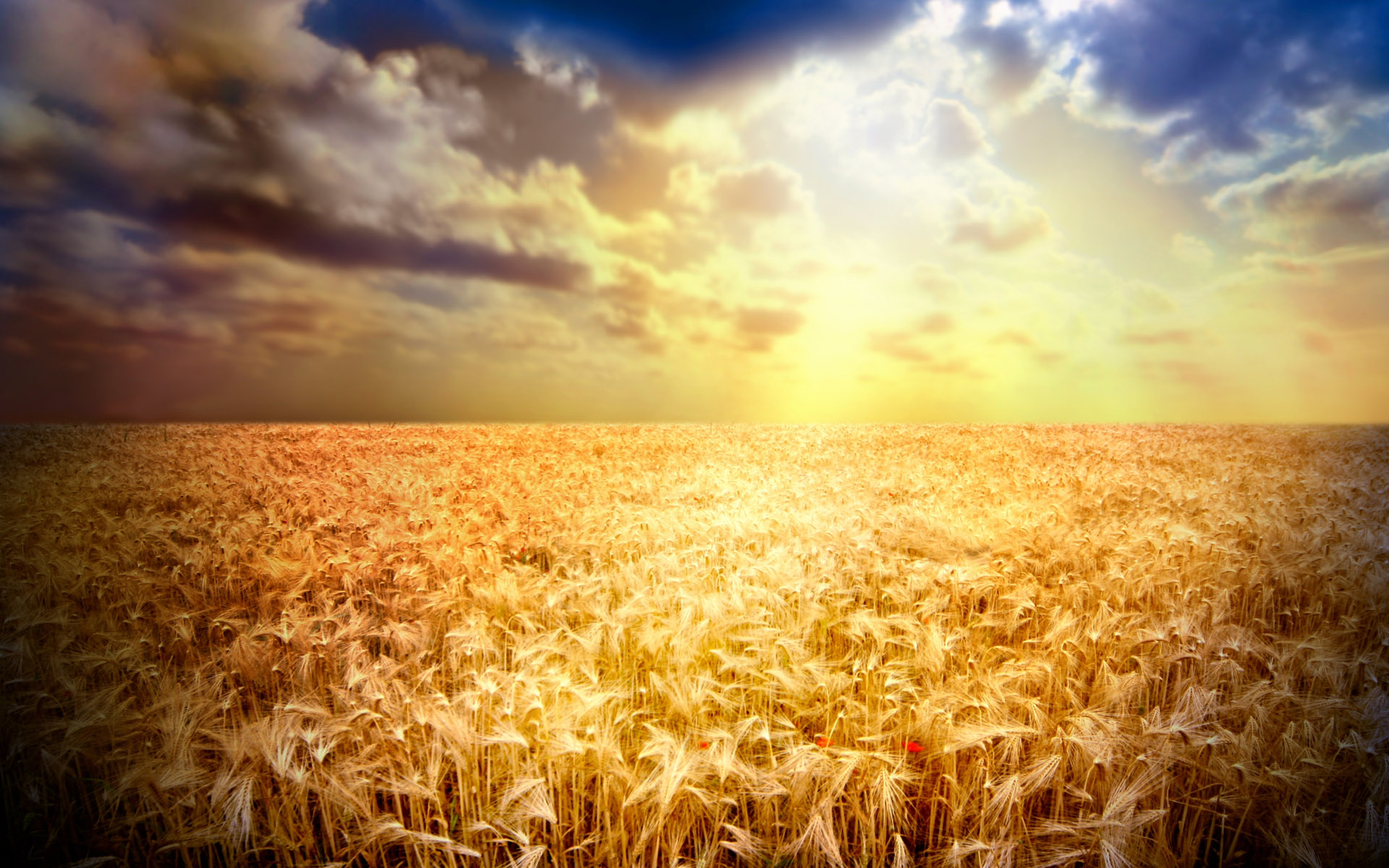 HD Cool Wheat Wallpaper For Background, Necole Avila 55