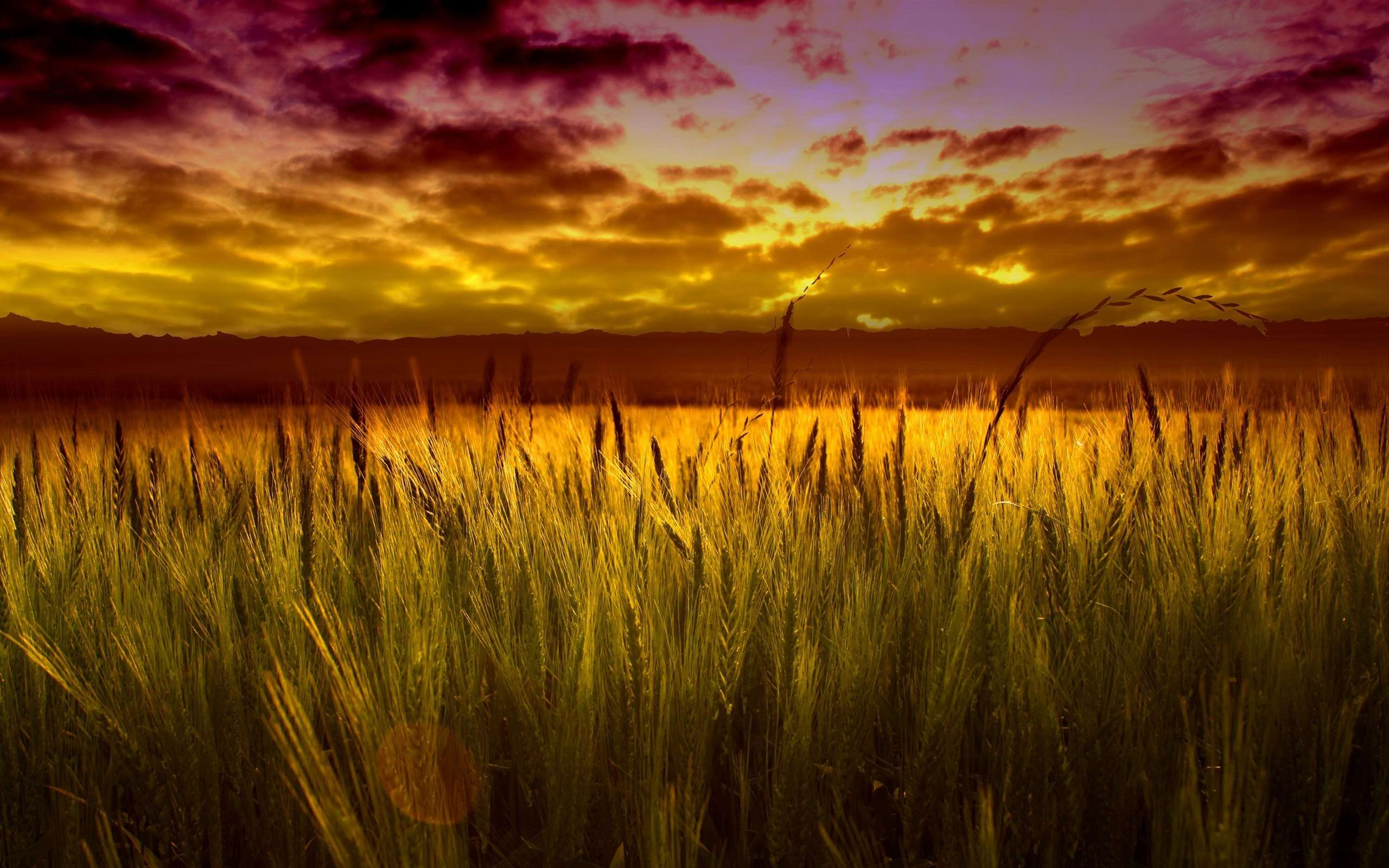 High Quality Images CollPection: Cool Wheat, by Loria Chenoweth