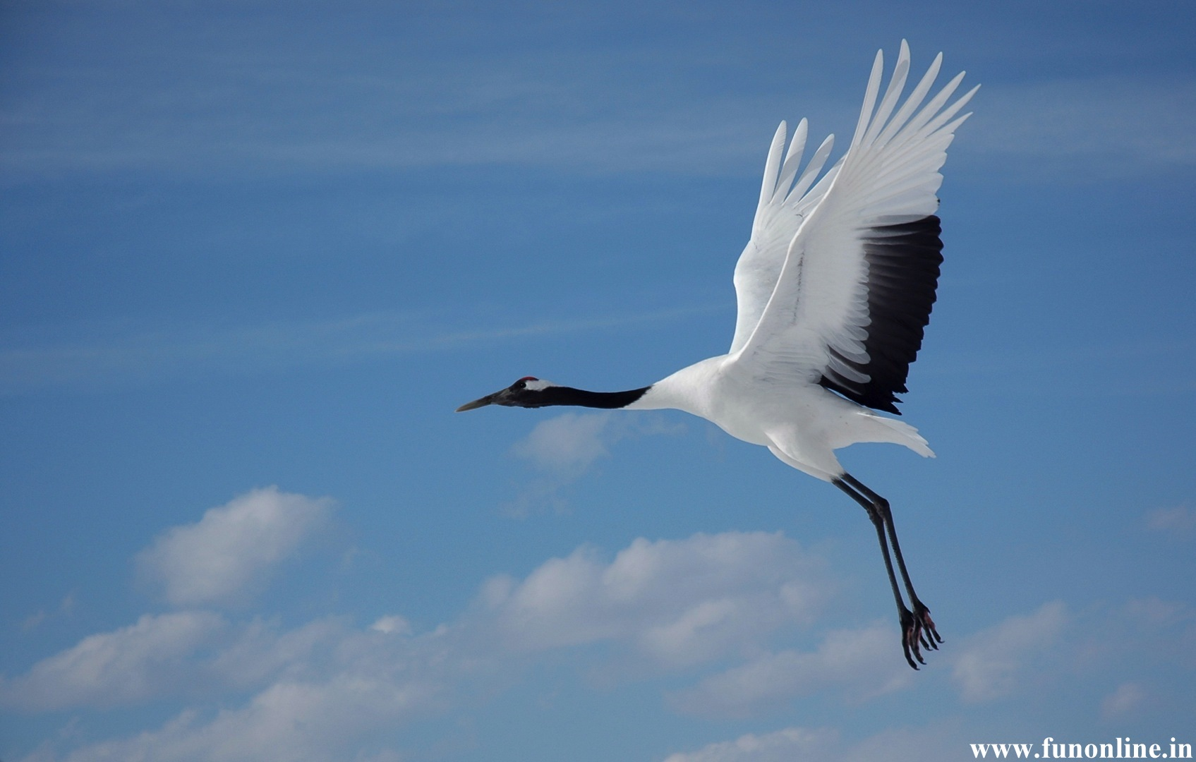 HDWP-42: Crane Bird Collection of Widescreen Wallpapers
