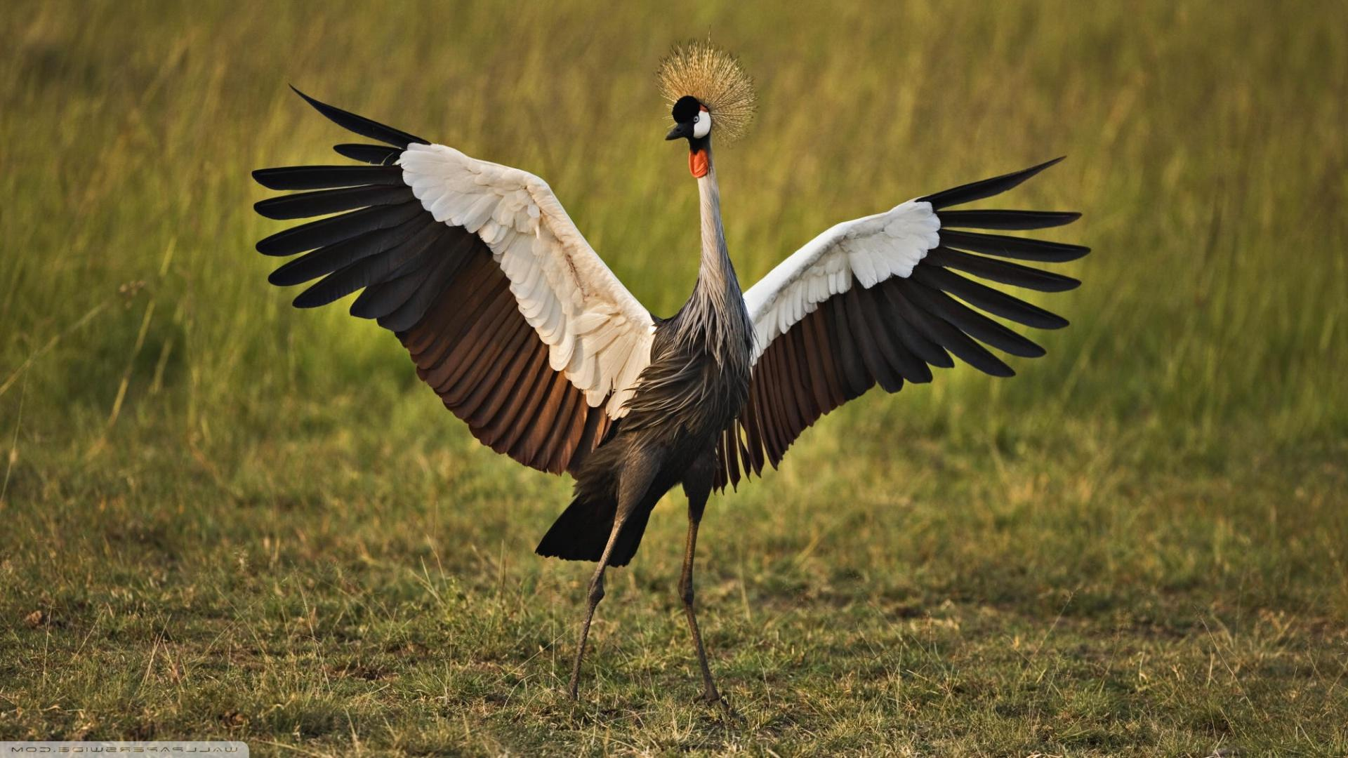 Download Free Crane Bird Wallpapers 1920x1080