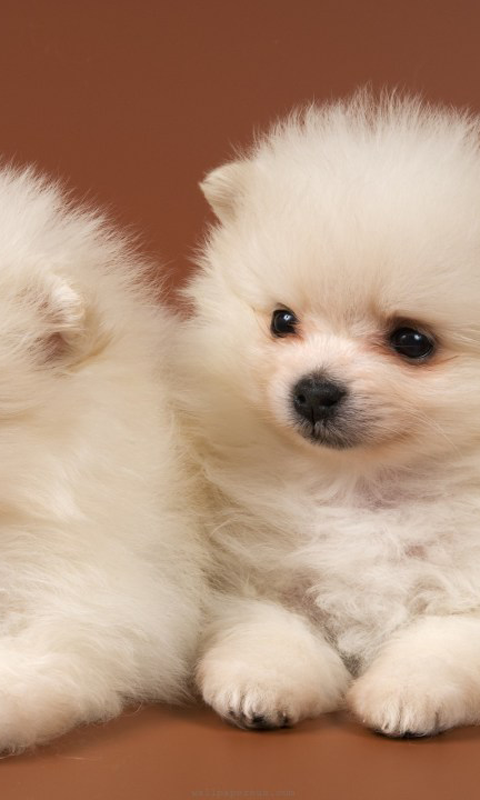 100% Quality Cute Dogs HD Wallpapers, 480x800