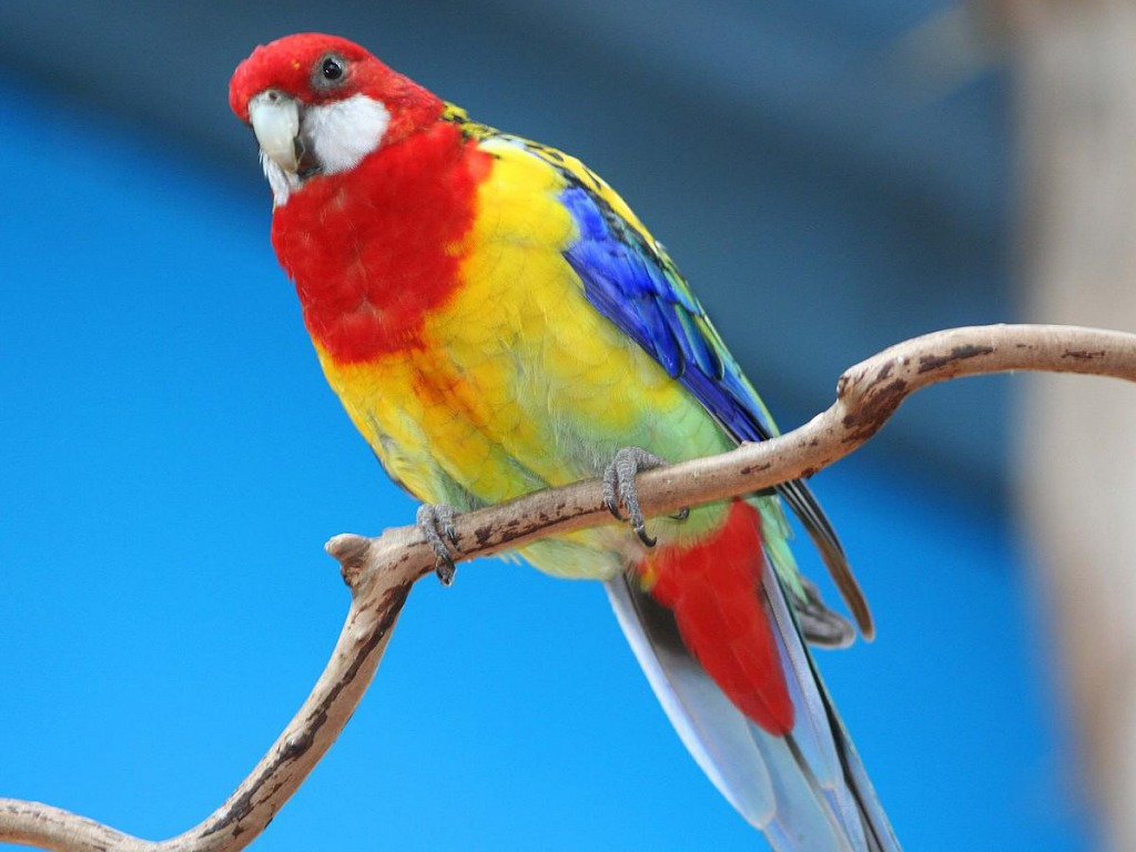Cute Parrot Wallpaper by Logan Calise, BsnSCB.com | Animals 4K Ultra HD