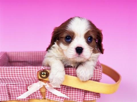 Cute Puppy HDQ Cover Live Wallpaper - DSC5959 Screenshot
