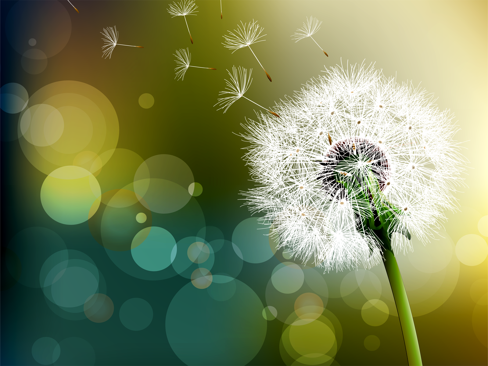 HDQ Wallpapers Dandelion Images For Desktop Free Download AFB HDQ