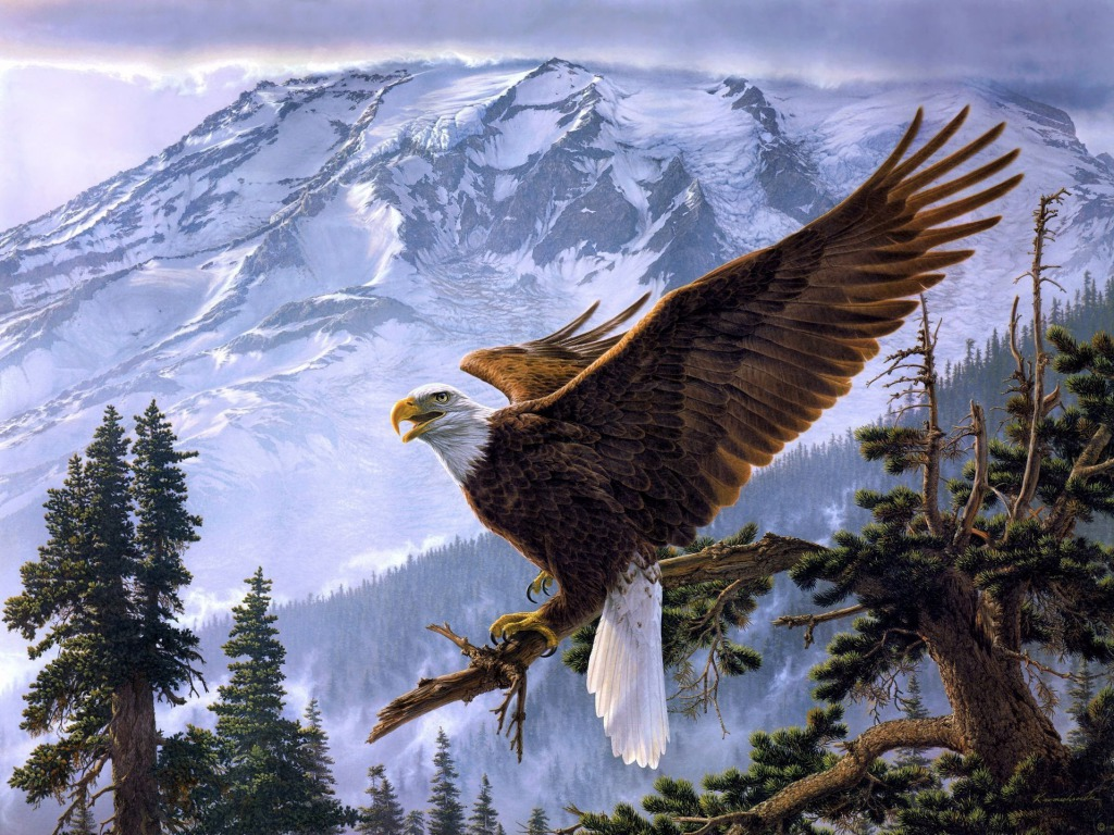 Eagle HQ Definition Wallpaper Download, Lory Witherow