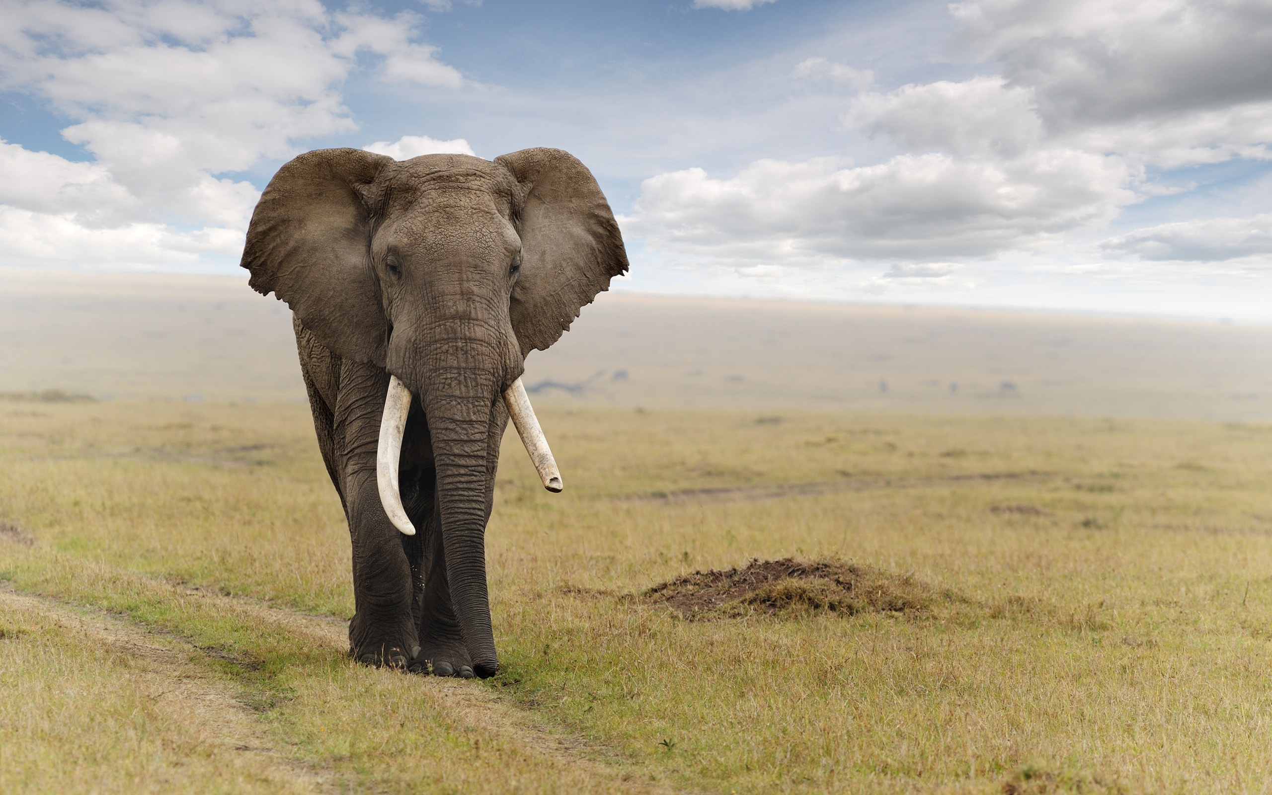 Elephant Computer Wallpapers, Desktop Backgrounds