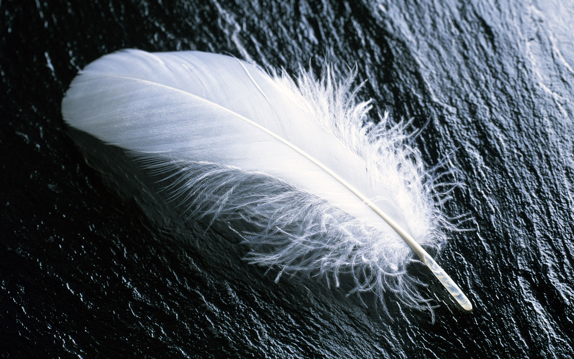 Nice Feathers Photos and Pictures, Feathers HQFX Wallpapers