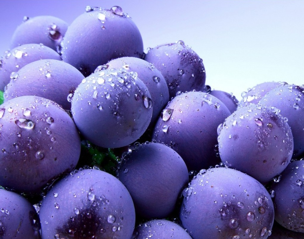 30/06/2015 - 1020x800 px Free Blueberry Desktop Wallpapers
