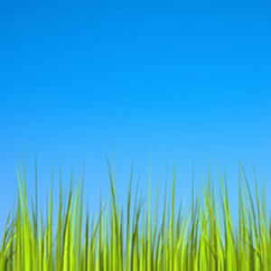 Top Free Grass HD Wallpapers | Amazing Images