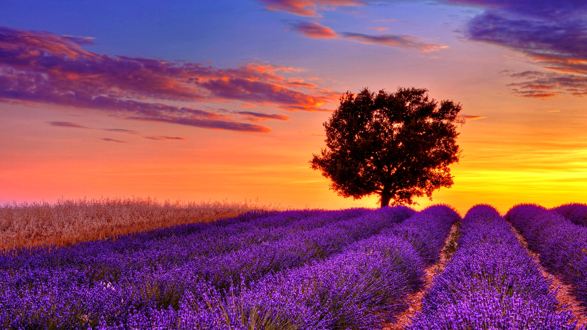 10/11/2013 - 1920x1080 Free Lavender Desktop Wallpapers