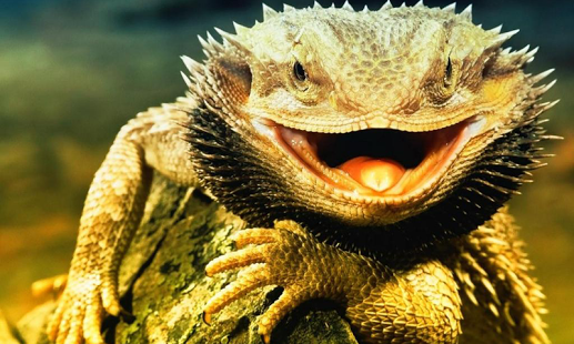 Free Lizard Wallpaper for PC | Full HD Pictures