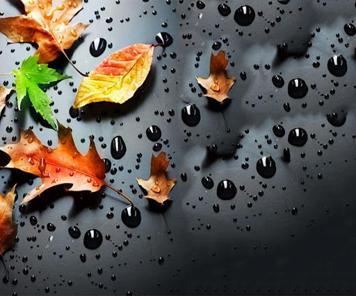 Free Raindrops High Quality Wallpapers Gallery, NFA.38873238