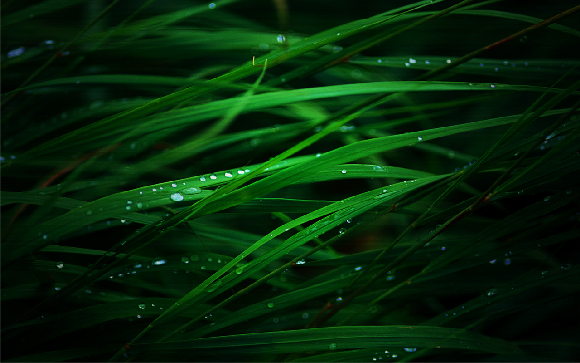 RMD:57 HD Grass Wallpapers