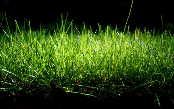 Collection of Grass Widescreen Wallpapers: 27374056, 580x363