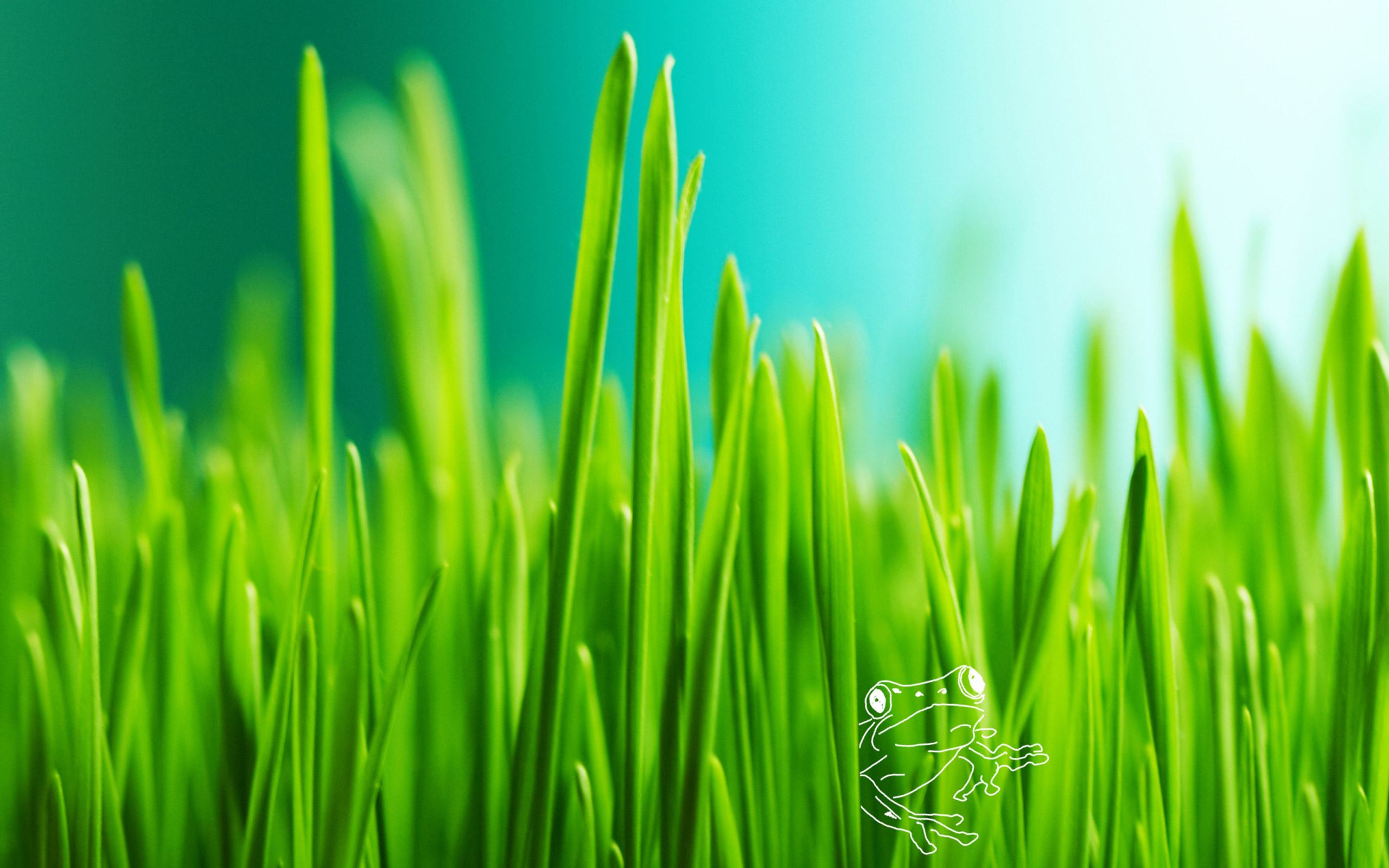 Full HD Quality Photos: Grass, 2560x1600 px