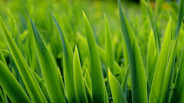 Free Cool Grass Images, Earleen Demas