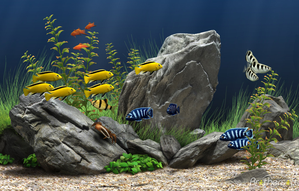 1024x656 px Aquarium Computer Wallpapers, BsnSCB.com