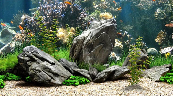 Interesting Aquarium HDQ Images Collection: 38689191, 585x326