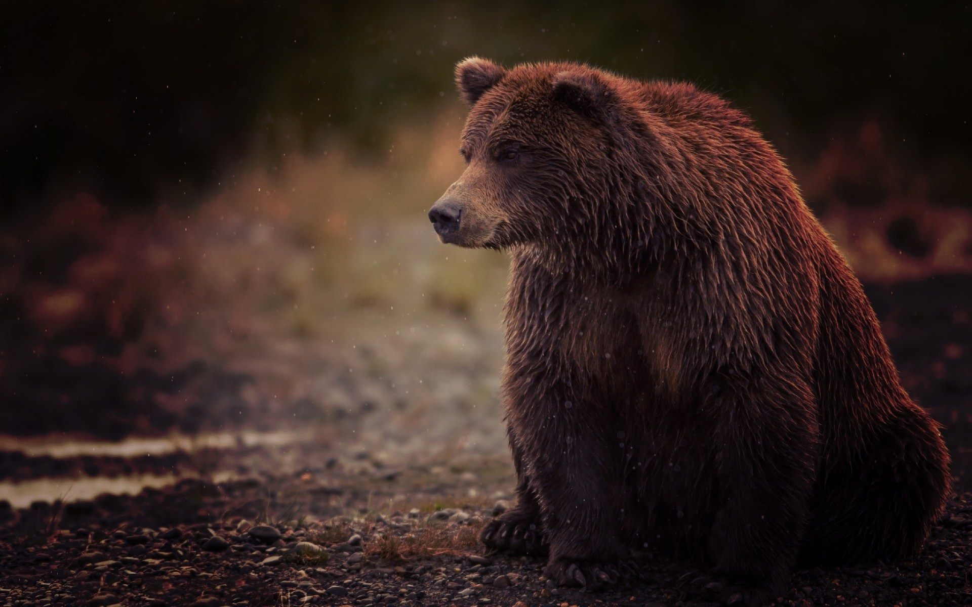 Wide HD Grizzly Wallpaper | BsnSCB Graphics Full HD