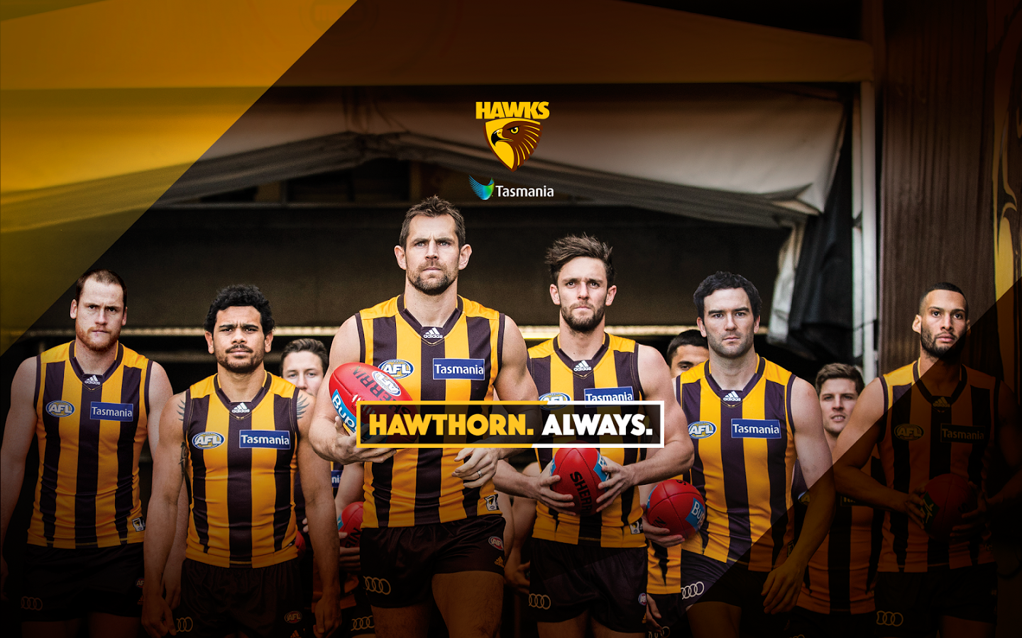 38779863 Hawthorn Wallpapers