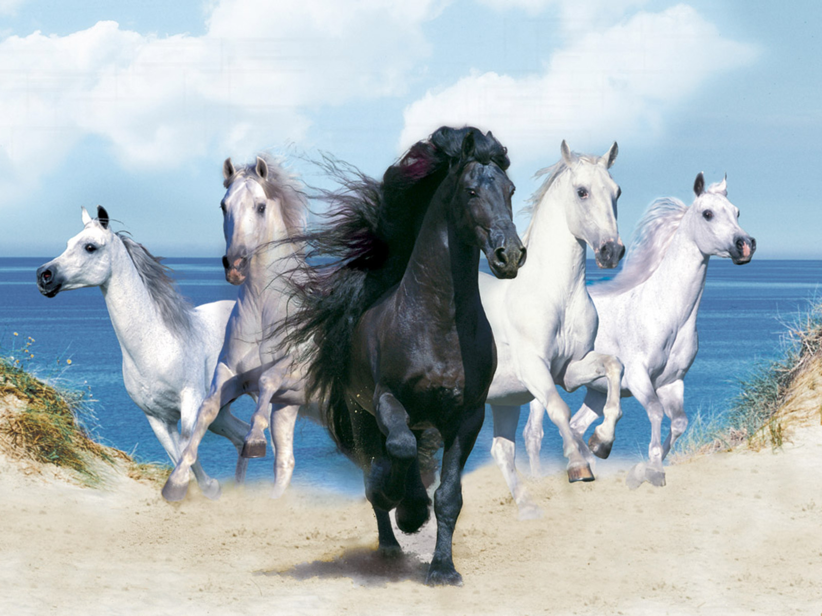 Beautiful Horse Wallpaper | BsnSCB Gallery
