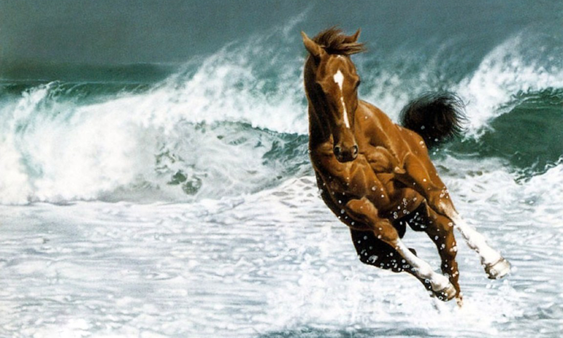 100% Quality Horses HD Wallpapers, 800x480 px